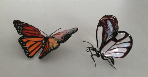 Vittorio Costantini butterfly